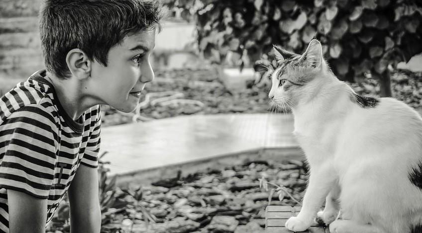 Bebés y gatos pueden convivir juntos