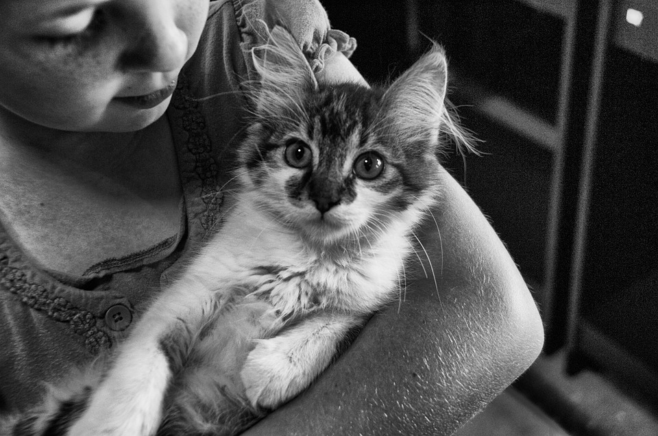 bebes-y-gatos-pueden-convivir-juntos